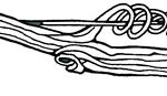 logo vrille tetue